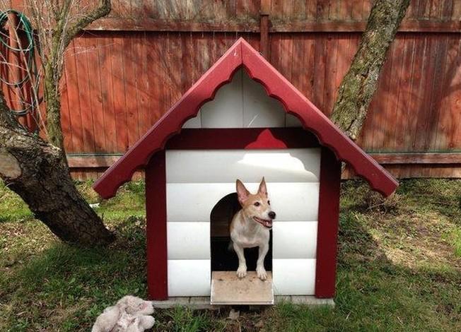 Будка для собаки своими руками. чертежи и размеры. лучшие мастер-классы