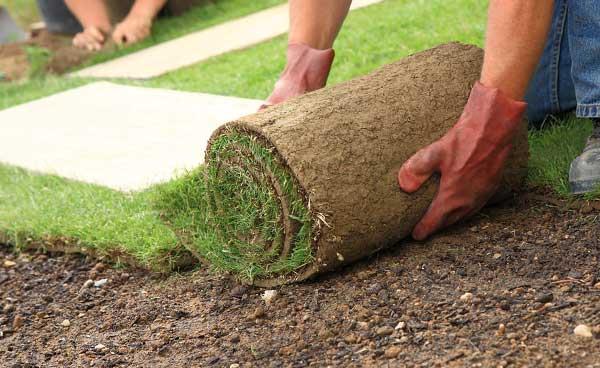 Как лучше укладывать рулонный газон на даче