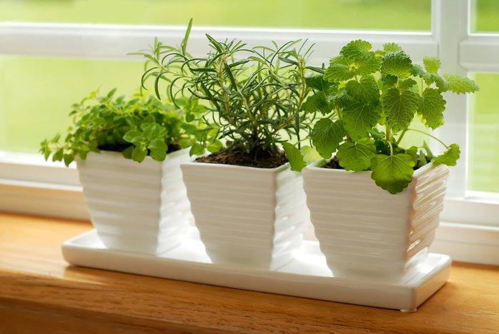 Актара для комнатных растений. как защитить цветы от вредителей